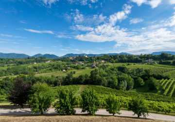 Prosecco DOCG - region Conegliano Valdobbiadene